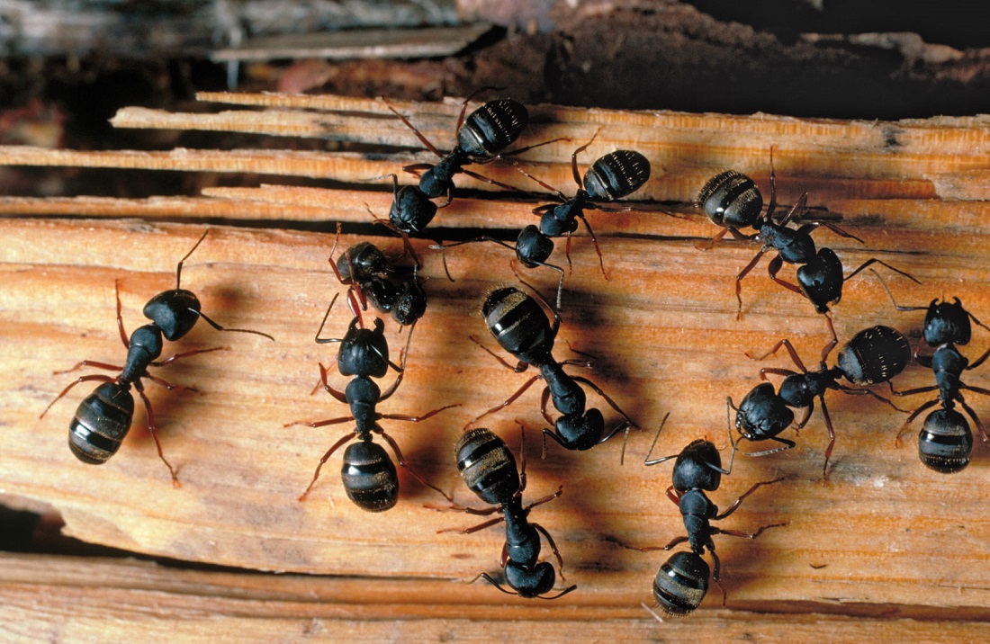 Want to know how to get rid of ants in the bathroom