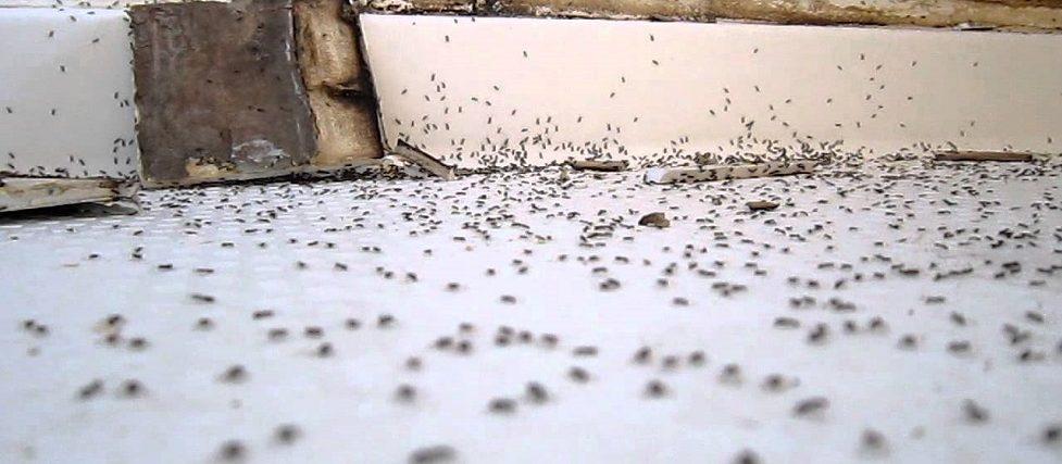 get rid of ants in the bathroom